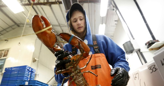 Layoffs hit, prices lag as tariff pinches lobster industry