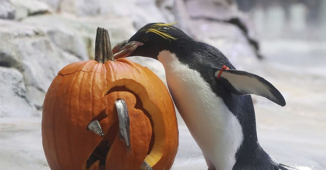 Halloween arrives early for inhabitants of Detroit Zoo
