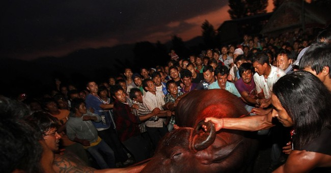 Groups hope to stop animal sacrifice during biggest festival