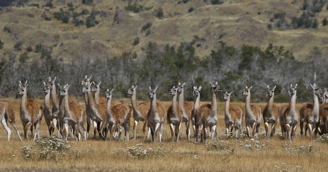 US conservationist, Chile sign creation of national parks
