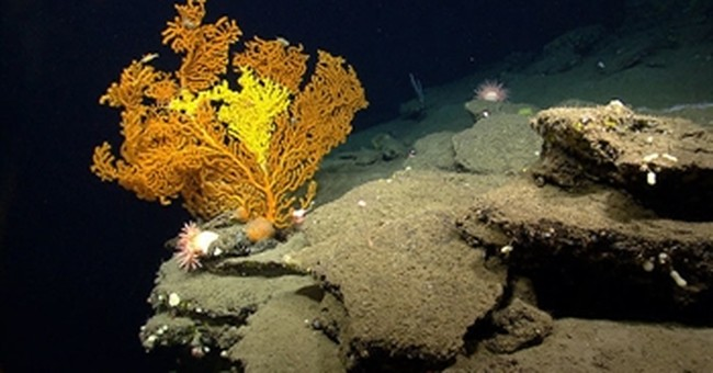 Regulators vote to protect more corals in Atlantic Ocean