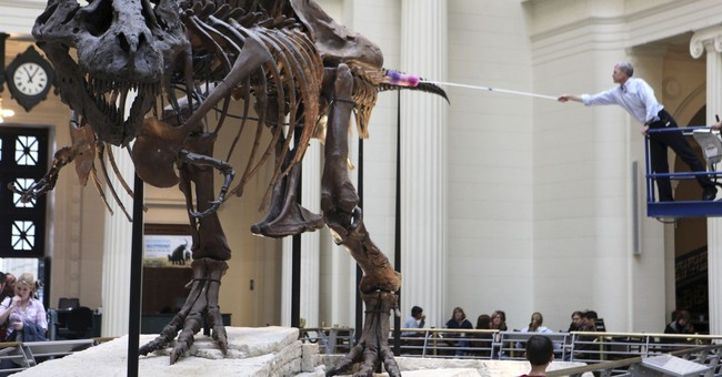 Sue, largest T. rex skeleton ever found, making a move