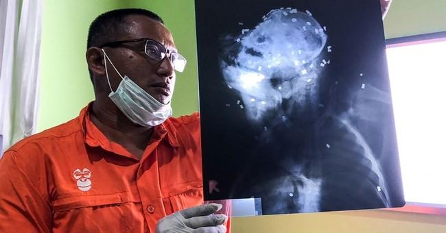 Orangutan shot with air gun 130 times in 2nd Borneo killing