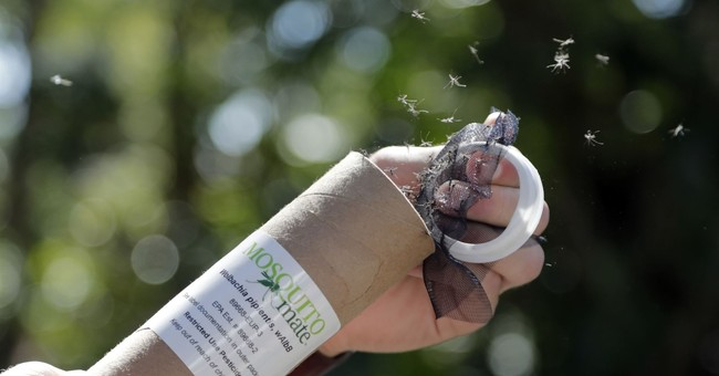 Bacteria-infected mosquitoes might be good thing for Miami