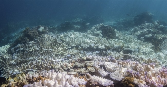 Low oxygen levels, coral bleaching getting worse in oceans