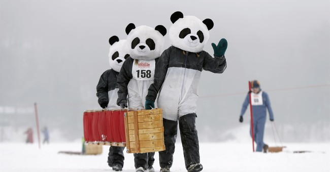 Down the chute: 'Fun and frivolity' at toboggan competition
