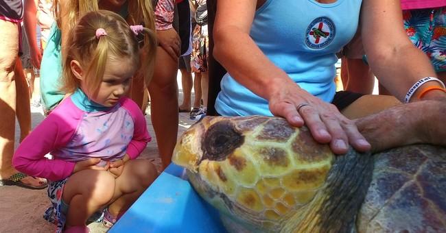 Booga is back: Turtle released off Florida Keys after rehab