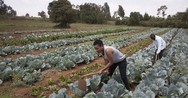 'Can you dig it?' Africa reality show draws youth to farming