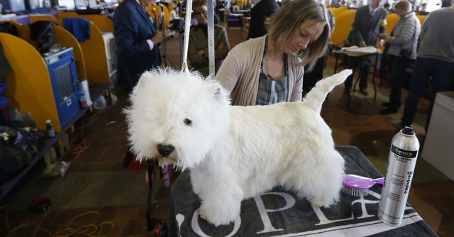 Westminster show dogs have some unusual food faves