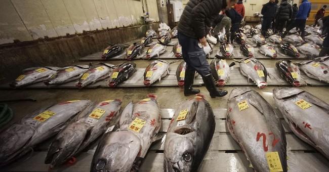 Bluefin tuna sold for $320,000 in Tsukiji's last new year