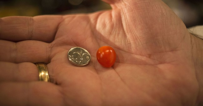 Israeli company says it has produced tiniest cherry tomato