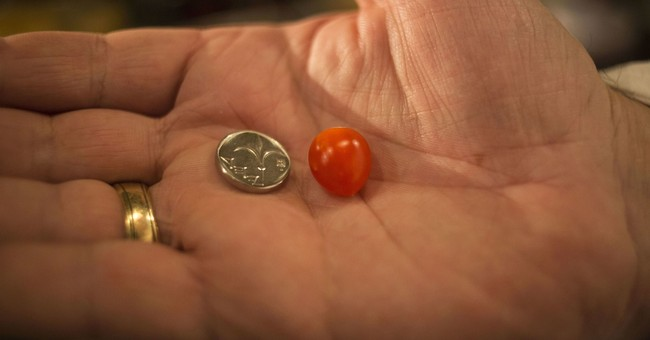 Israeli company says it has produced tiniest cherry tomato