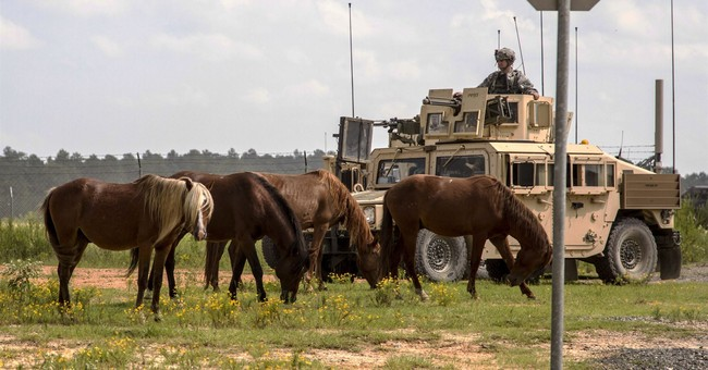 Animal group: Army base escalates wild horse roundups