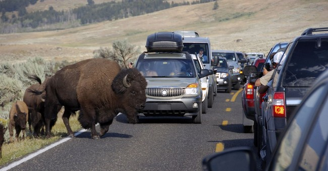Video: Child Tossed By Charging Bison