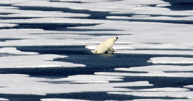 Healthy Polar Bears and Thriving Tigers: The Common Climate Tale
