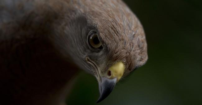 2.9 Billion Bird Deaths Linked to Solar, Wind