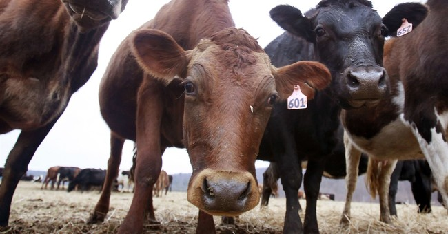 Study: Green New Deal Would Destroy America's Dairyland