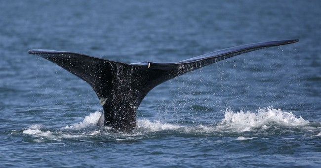 Good Entrepreneurs Are Good Environmentalists: How Rockefeller Helped Save Whales And Natural Resources