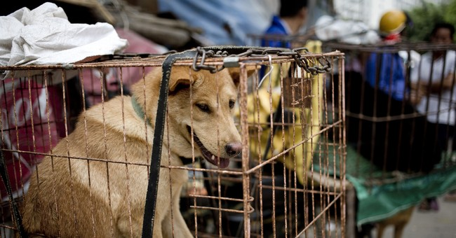 China Reclassifying Dogs as 'Pets' Instead of 'Livestock'