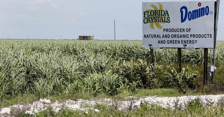 In this, Monday, July 11, 2016 photo, sugar cane fields border a roadway in South Bay, Fla. The massive algae outbreak that recently caked parts of Florida's St. Lucie River with guacam