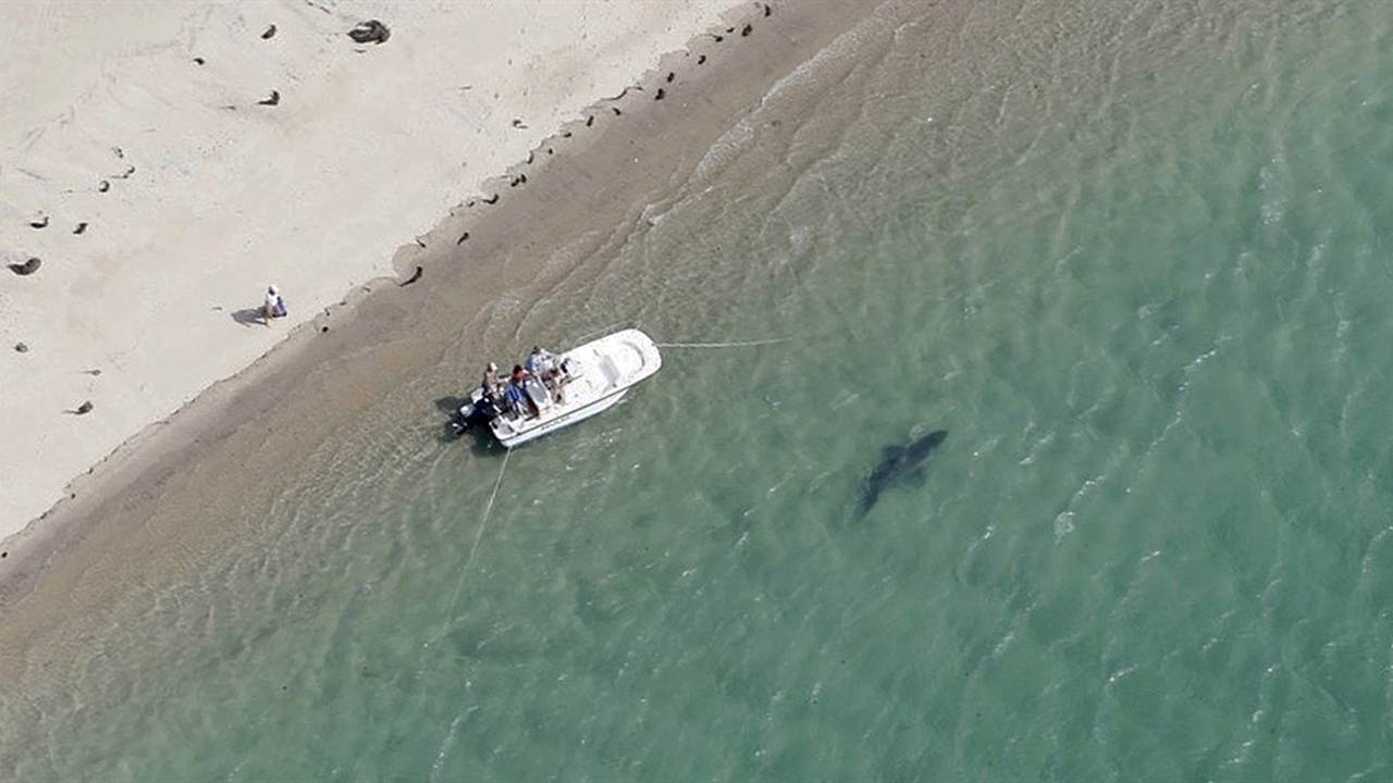 Fatal Shark Attack in Maine Strikes Fear in Beachgoers Across New England
