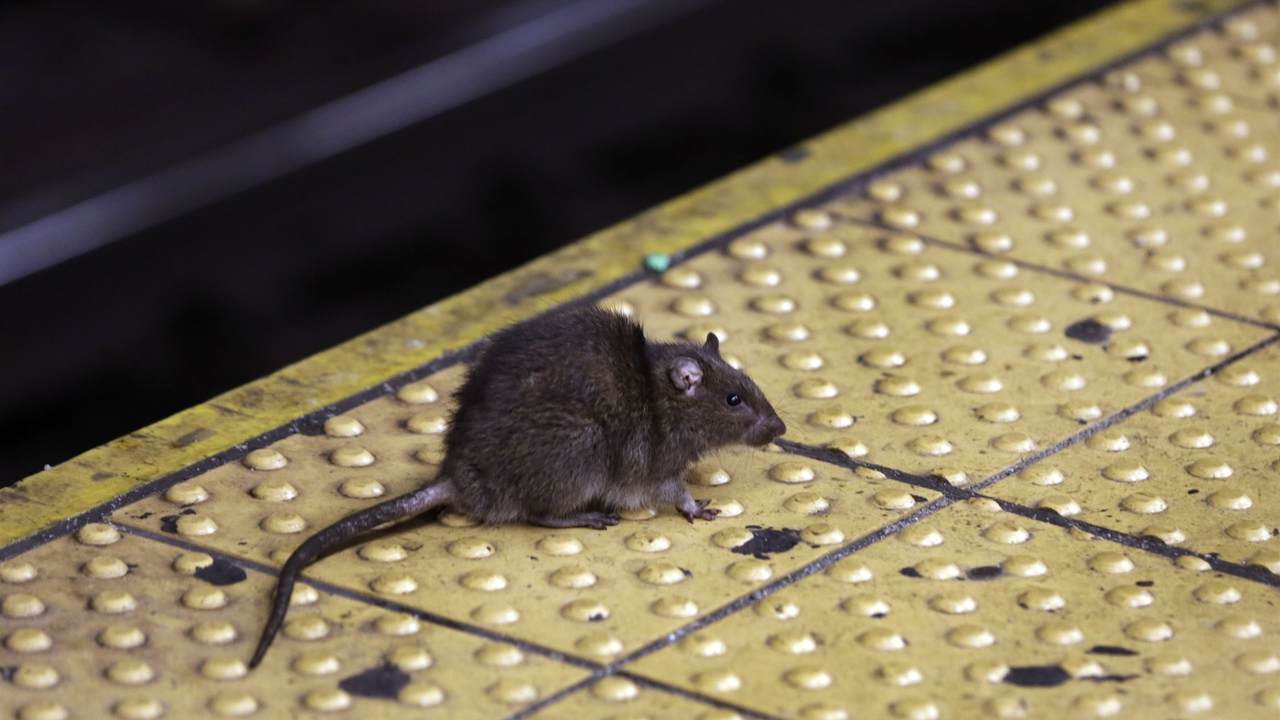 Man in China Dies from Hantavirus...And Twitter Is Flipping Out