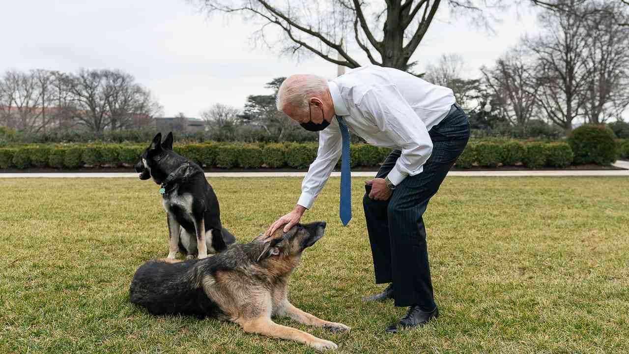 Will Biden Ban Assault Dogs?